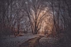 Snowy Forest (iamjoelcris) Tags: road park trees winter sunset snow forest joelcris joelcriscreativemedia iamjoelcris flicksbyjc