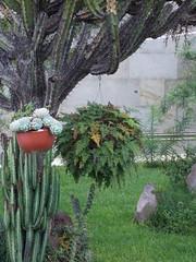 DSCN2501 (Alejandra Fajardo) Tags: flowers naturaleza 3 nature landscape mexico hotel la mujer plantas iii jardin paisaje escultura trendy chic suites reserva milenio qro bugambilia querataro