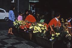 Saudade 595 ( Portimagem) Tags: flowers flores portugal madeira historia funchal patrimnionacional