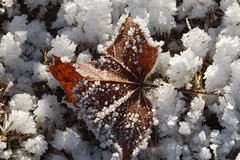 Frozen Leave. (Chia.photography.) Tags: italy macro ice nature colors photography frozen amazing nikon view details ghiaccio