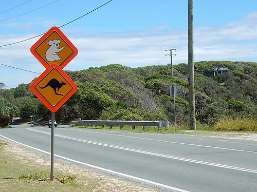 Beware Native Fauna