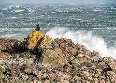Big Seas at St Ives 1098 (RockArea) Tags: cornwall stives