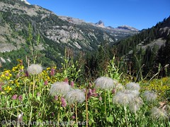 Wildflowers along the Stairway to Heaven 1 (Anne's Travels 4) Tags: canyon wildflowers wyoming wilderness tetons stairwaytoheaven grandtetonnationalpark jedediahsmithwilderness