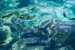 Thailand - Phi Phi Islands (Cyrielle Beaubois) Tags: water thailand islands asia paradise turquoise lagoon thalande clear southeast transparent fishes kohphiphi 2015 canoneos5dmarkii cyriellebeaubois