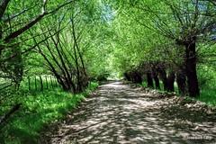 A la sombra en el sendero / Under the shade on the trail (pepelara56) Tags: rboles camino sombra