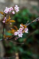 IMG_3527IMG_3527bis3 (::nicolas ferrand simonnot::) Tags: paris flower zeiss vintage lens prime bokeh 10 jena carl m42 bloom f2 58mm blades | 2016 biotar carlzeissjena