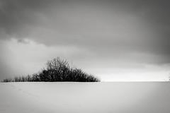 Quiet space (Jean-Franois Thibault) Tags: bw monochrome landscape noiretblanc qubec monochrone