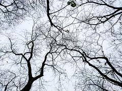 #Deadwood (David C W Wang) Tags: blackwhite taiwan kaohsiung 台灣 高雄 黑白 植物 枯枝 樹 鳥松濕地公園 戶外 打結 小樹枝 niaosongwetland sonyxperiaz5