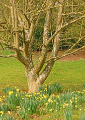 Batsford Arboretum (Andy Latt) Tags: park nature garden sony arboretum cotswolds gloucestershire glos batsford batsfordarboretum andylatt rx100m3 dsc010211