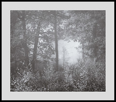 Weirding (Gibbom) Tags: morning autumn trees light mist tree nature leaves misty fog natural sinister growth tangle twisted mire entangled 200mm