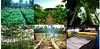 pohon_jabon (agropenghijauan) Tags: forestry logging plantation agriculture kayu plating reforestation greening jabon entrepreneur bisnis agrobusiness replanting greenwarrior penghijauan businessopportunity kehutanan konservasi perkebunan investasi reforesting agribisnis wirausaha peluangusaha platage reboisasi agrobisnis wiraswasta pelestarianalam environtmentconservation
