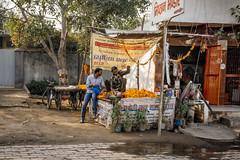 on the road to Agra, view07, India (lumierefl) Tags: india agra roadside fruitstand marigold southasia uttarpradesh