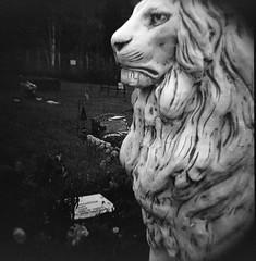 Birch Hill Cemetery (R. Drozda) Tags: blackandwhite bw film grave statue alaska lion dianaf fairbanks birchhill gravemarker roll50 trix120film drozda birchhillcemetery september2015 pandalab3894