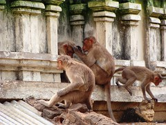 Monkey corner: Vedagiri Lakshmi Narasimha Temple (10) (v s raam (on/off)) Tags: wild india public rock century temple monkey vishnu hill sage feed karnataka 9th andhra pest tamilnadu menace penna inscription infest wildanimals andhrapradesh konda pallava feedingwildanimals narasimha 9thcentury yagam nellore lakshminarasimha lordvishnu kasyapa prahlada pinakini rockinscriptions ninthcentury andhrapradhesh saptarishi prahalada pallavaking narasimhakonda vedagiri narasimhavarma