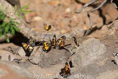 Argentinien_Insekten-61 (fotolulu2012) Tags: tierfoto