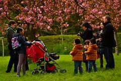 enjoying cherry blossom (__sam) Tags: flowers paris de cherry japanese spring cloudy blossom april sceaux pard 2016