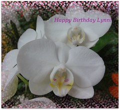 Happy Birthday Lynn! (martian cat) Tags: orchid flower macro nature japan onwhite birthdaycard allrightsreserved inage allrightsreserved martiancatinjapan allrightsreserved happybirthdaylynn chibafloralmuseum martiancatinjapan martiancatinjapan allrightsreserved martiancatinjapan