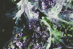 IMG_3376 (WahidaSamsuddin) Tags: morning green nature floral canon fun 50mm mood purple bright outdoor calm pop fresh malaysia f18 canoneos digitalphoto terengganu malaysianphotographer adobelightroom femalephotographer 550d telukketapang terengganuphotographer wahidasamsuddin