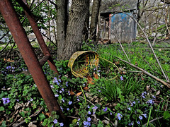 Why drop the basket ~ Scampering up the ladder ~ Mystery unsolved (JYB, that's me) Tags: tree forest spring interesting weeds woods basket haiku shed treetrunk mysterious trunk wildflowers ladder easterbasket explored rustyladder