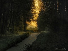 Circumstantial (manonvanderburg) Tags: forest sunrise canon dawn early woods peace bos wilgen doorkijk zonsopkomst sereen sx60 powerrrrshot