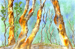 Australian Eucalyptus Forest - Watercolour - (Explored #161 - 23/03/2016) (Lani Elliott) Tags: blue trees brown color colour green art nature forest painting landscape bush watercolour colourful australianlandscape lani allrightsreserved eucalyptustrees burntsienna explored australianwatercolour elliottlani lanielliott