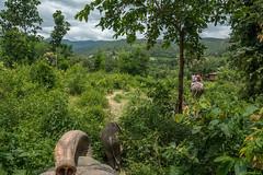 Elephant trek (dominiquesainthilaire) Tags: travel elephant green tourism clouds trekking thailand landscapes nikon vert chiangmai nuages ricefields paysages tourisme rizires thailande voyages mousson lphant nikond7100