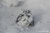 shs_n8_044130 (Stefnisson) Tags: iceland mud pot geothermal myvatn ísland hver solfatara námaskarð mývatn fumaroles hverir leirhver hverasvæði jarðhiti stefnisson