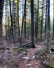 The sun is out in North Idaho and spring is here. #hikenorthidaho #ig_idaho #pnw #idahoadventures #idahoexplored #upperleftusa #visitidaho #visitnorthidaho