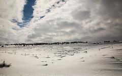 Snow near Red Canyon (wyojones) Tags: trees snow fence wyoming np bushes drifts windblown lander wyojones ripplea southpasshighway wyoming28