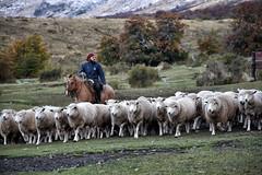 LLegando a casa a descansar (jfajardos) Tags: argentina gaucho nikond7200