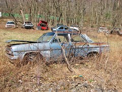JUNK RAMBLER (richie 59) Tags: trees usa ny newyork cars car america sedan outside us spring weeds junk rust unitedstates weekend sunday rusty vehicles faded rusted newyorkstate junkyard autos amc rambler oldcar sideview oldcars automobiles nys rustycar nystate hudsonvalley 2016 americancar motorvehicles fadedpaint ulstercounty 4door americanmotors junkcars uscar midhudsonvalley fourdoor midhudson ulstercountyny 4doorsedan fourdoorsedan ramblerclassic 1960scar 2010s richie59 townofshawangunk rustyrambler ramblersedan townofshawangunkny april2016 april171016