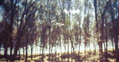 Protagonista inesperado - Unexpected character (Rubn RB) Tags: hello nature insect unexpected hola selfie insecto protagonist captivating protagonista inexperado naturalezacautivadora