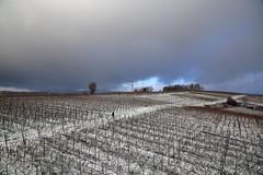 IMG_1483 (D.Phil) Tags: schnee winter natur freiburg landschaft kaiserstuhl weinberge opfingen