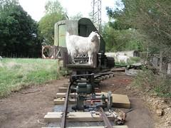 Drilling Rail (Tramway Goats) Tags: track tramway drill observer onlooker trackwork