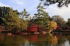 Autumn scene under back lights (Go Go Janet) Tags: japan garden japanesegarden maple pond    nara redleaves  reflecitons