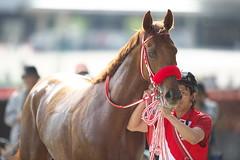 Kafuji Prince -Shinryoku Sho (arumckF) Tags: tokyo  sho horserace heartscry    yoshitoyahagi  syuishibashi  kafujiprince ginzafloral  shnryoku