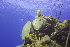 DSC06022 (Andreuha) Tags: shipwreck koniclassfrigate 356 wreckdiving sky underwater caymanbrac