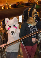 _DSC9088 (Acrufox) Tags: midwest furfest 2015 furry convention december hyatt regency ohare rosemont chicago illinois acrufox fursuit fursuiting mff2015