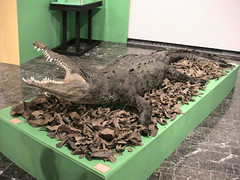Chiapas (Tuxtla Gutierrez-Museo Regional)_007 (t_alvarez07) Tags: de gutierrez museo chiapas mayas antropologia tuxtla