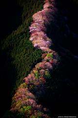 colorful mountain (nakashy) Tags: trees mountain nature beautiful japan canon landscape eos 5d canoneos5dmarkiii