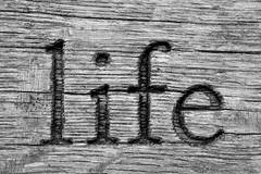 DSC_0662 (janeewillis) Tags: life park wood texture bench word memorial grain carve lettering