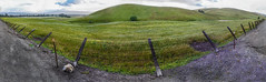 fenced in (pbo31) Tags: california road panorama color green field fence back spring wire nikon farm country grow large panoramic dirt bayarea april eastbay bent livermore stitched alamedacounty 2016 boury pbo31 d810
