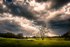 Storm in those Howardian Hills (Andy T Whittaker) Tags: york storm tree nature clouds landscape yorkshire drama aonb howardianhills
