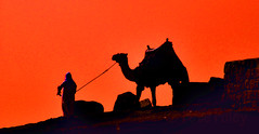 The Pyramids at Luxor (Pete Foley) Tags: africa sunset silhouette nikon egypt cairo camel arab luxor d300 flickrsbest overtheexcellence