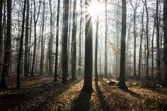 My Forest Pathway  [Explored] (pwendeler) Tags: nature forest natur rays wald sonnenstrahlen waldweg forestpathway petrawendeler
