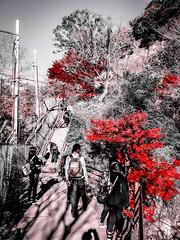 Shashin - DSCN2813 (Mathieu Perron) Tags: life city bridge people bw white black monochrome japan nikon noir perron daily nb journey  mp blanc japon personne ville gens vie mathieu   sjour   quotidienne      p520  zheld