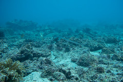 20160103-DSC_8381.jpg (d3_plus) Tags: sea sky fish beach japan scenery underwater diving snorkeling     apnea j4  miura  waterproofcase    skindiving      nikon1 kanagawapref 1030mm araihama  1  nikon1j4 1nikkorvr1030mmf3556pdzoom 1030mmpd nikonwpn3 wpn3   beacharaihama