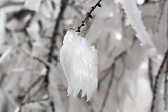 _MG_1055 (schamrock77) Tags: winter italy mountain ice freezing natura inverno montagna friuli ghiaccio galaverna canon6d 35f2is