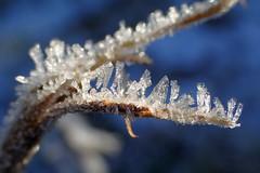 Cristalli di ghiaccio (libra1054) Tags: winter macro ice gelo nature crystals bokeh outdoor hiver natur natura invierno eis inverno hielo glace cristales ghiaccio cristais kristalle cristalli cristaux