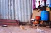 DSC01828 (kkfp) Tags: india color yoga fruit naked fire photography vishnu streetphotography covered sacred yogi ash maharashtra shiva sept baba sadhu saffron ashram naga mela offerings nashik 2015 kumbhmela mahakumbh